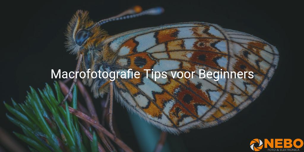 macrofotografie-voor-beginners